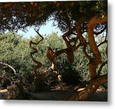 Twisty Tree Metal Print