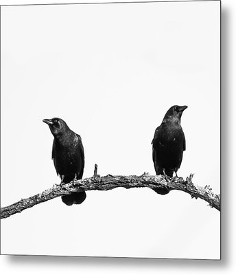 Two Black Crows One Branch White Square Metal Print by Terry DeLuco