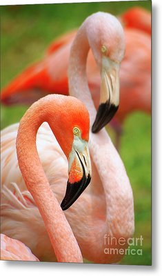 Two Flamingoes Metal Print by Carlos Caetano