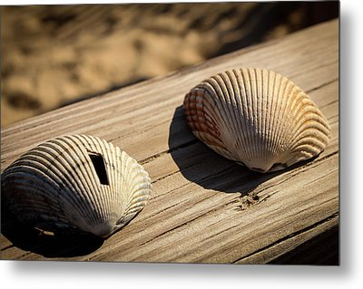 Two Little Shells Metal Print