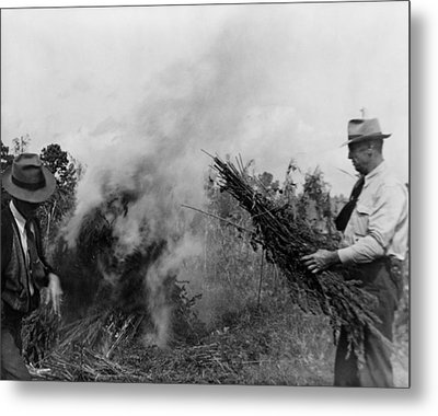 Two Men Burning Marijuana In Field Metal Print by Everett