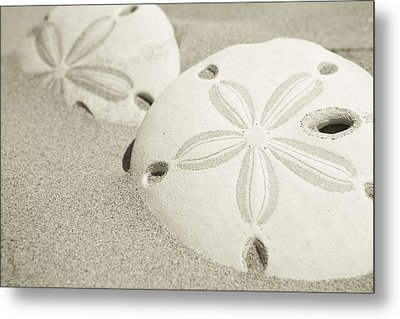 Two Sand Dollars Rest In The Sand Metal Print by Ralph Lee Hopkins