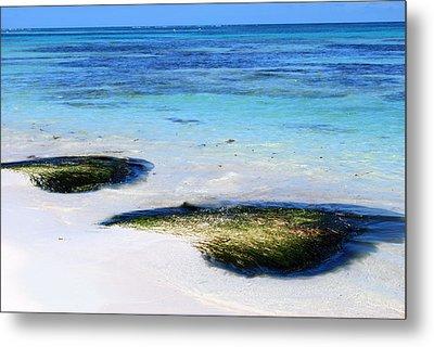 Two Seaweed Mounds On Punta Cana Resort Beach Metal Print