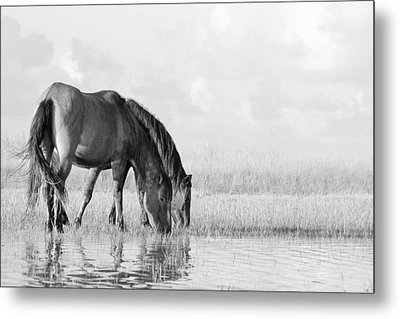Two Wild Mustangs Metal Print