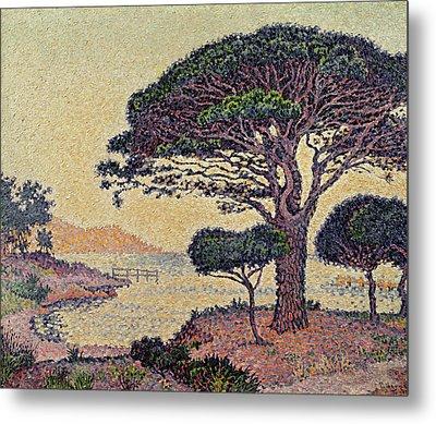 Umbrella Pines At Caroubiers Metal Print by Paul Signac