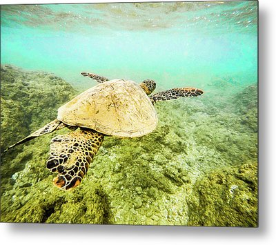Underwater Flight Metal Print by Peter Irwindale