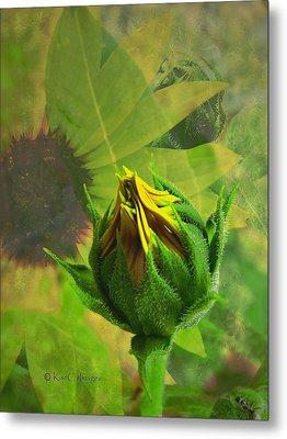 Unfolding Sunflower Metal Print