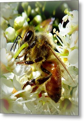 Up Close And Personal Honey Bee Metal Print