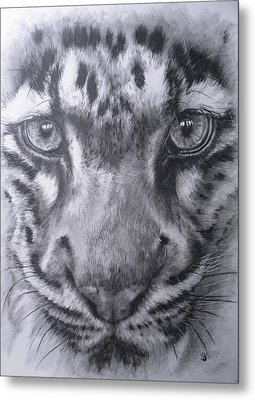 Up Close Clouded Leopard Metal Print by Barbara Keith
