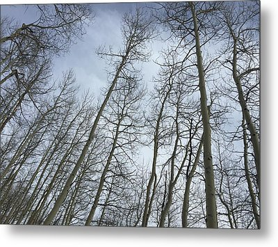 Up Through The Aspens Metal Print by Christin Brodie