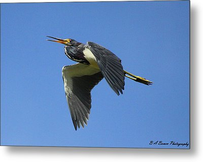 Up Up And Away Metal Print by Barbara Bowen