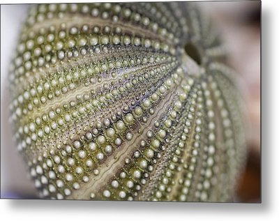 Urchin Texture Metal Print by Laura George