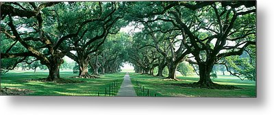 Usa, Louisiana, New Orleans, Brick Path Metal Print by Panoramic Images