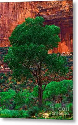 Utah - Cottonwood Metal Print by Terry Elniski