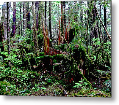 Very Old Forest Metal Print by Anne Havard
