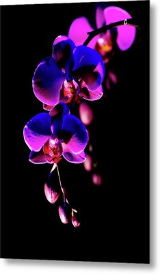 Vibrant Orchids Metal Print by Ann Bridges