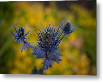Vibrant Thistles Metal Print by Mike Reid