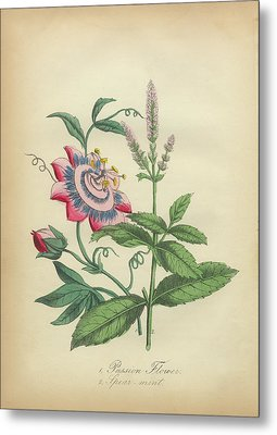 Victorian Botanical Illustration Of Passion Flower And Spearmint Metal Print by Peacock Graphics