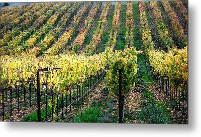 Vineyards In Healdsburg Metal Print by Charlene Mitchell