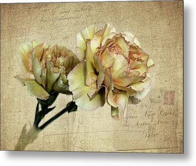 Vintage Carnations Metal Print by Judy Vincent
