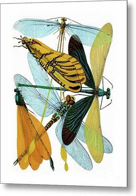 Vintage Dragonflies, Damselflies Etomology Illustration Metal Print by Tina Lavoie