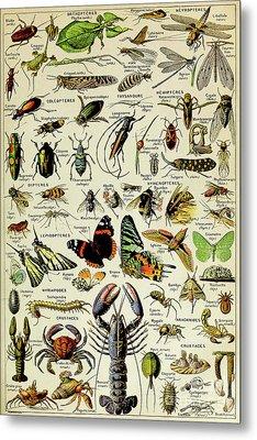 Vintage Illustration Of Various Invertebrates Metal Print