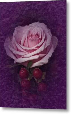 Metal Print featuring the photograph Vintage Pink Rose Feb 2017 by Richard Cummings
