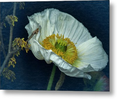 Metal Print featuring the photograph Vintage Poppy 2017 No. 2 by Richard Cummings