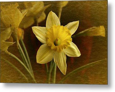 Vintage Yellow Narcissus Metal Print by Richard Cummings