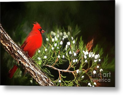 Metal Print featuring the photograph Virginia State Bird by Darren Fisher
