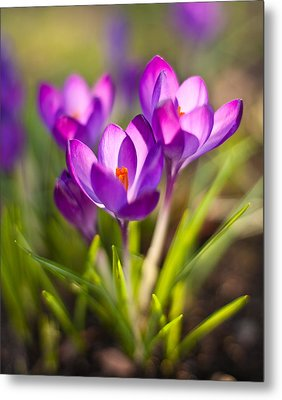 Vivid Petals Metal Print by Mike Reid