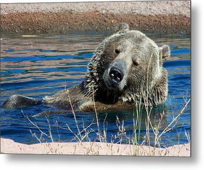 Waiting On Lunch Metal Print by Karen Wiles