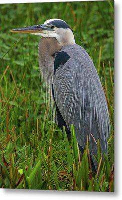 Metal Print featuring the photograph Wakodahatchee Wetlands Bird by Juergen Roth