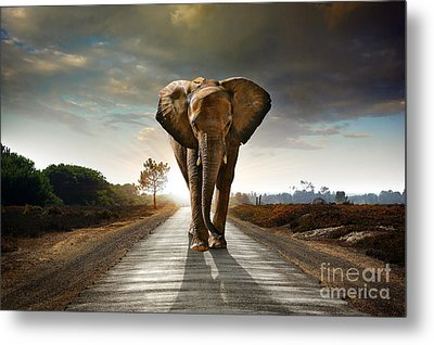 Walking Elephant Metal Print