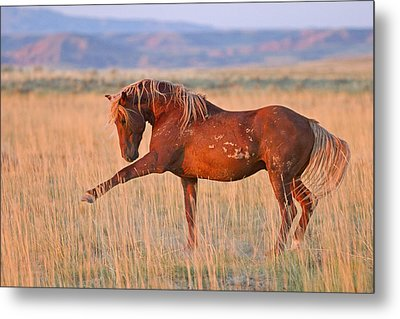 War Horse Metal Print by Sandy Sisti