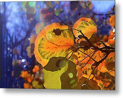 Warm Autumn Day Metal Print by Kat Besthorn