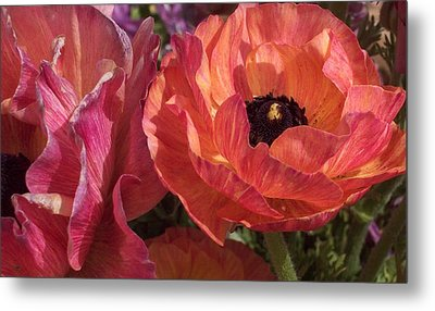 Warm Flower Friends Metal Print by Jean Booth