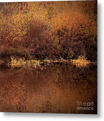 Metal Print featuring the photograph Warm Reflection by The Forests Edge Photography - Diane Sandoval