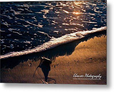 Metal Print featuring the photograph Washed Ashore by Everett Houser