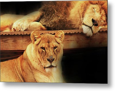 Watchful Eye Metal Print by Kim Henderson