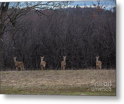 Watching Deer Metal Print