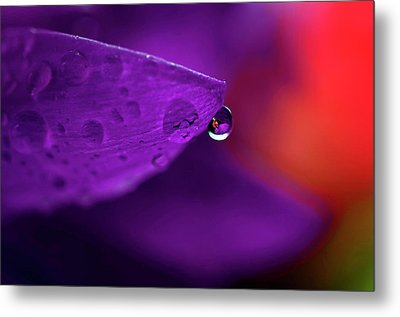 Water Drop Reflections With Purple II Metal Print