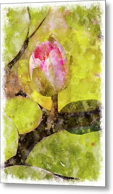 Water Hyacinth Bud Wc Metal Print by Peter J Sucy