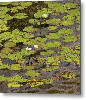 Water Lilies Metal Print by Gwen Vann-Horn