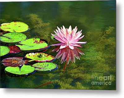 Water Lily And Frog Metal Print by Savannah Gibbs