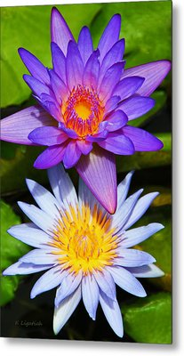 Water Lily Blossoms Metal Print by Kerri Ligatich
