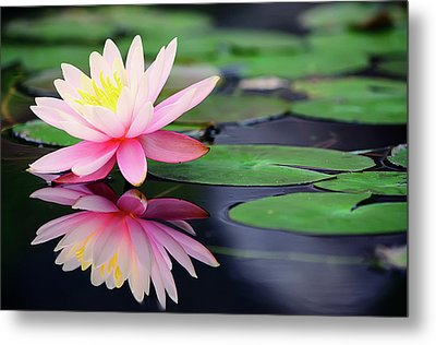Water Lily In Lake Metal Print