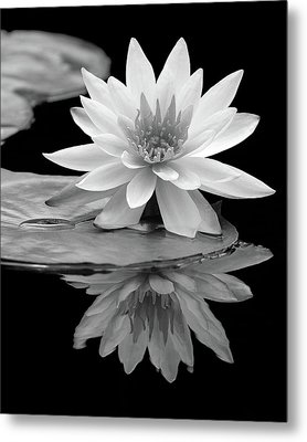Water Lily Reflections I Metal Print