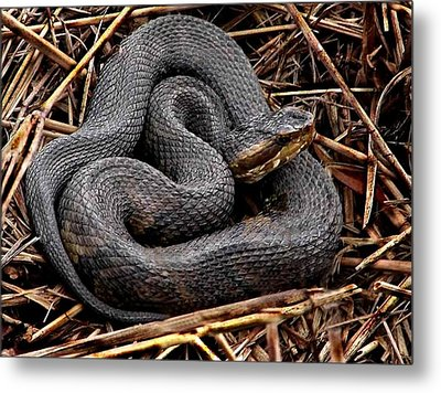Water Moccasin Metal Print by Bruce W Krucke