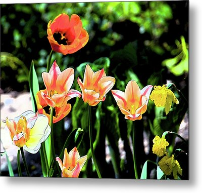 Metal Print featuring the photograph Watercolor Tulips by Sheryl Thomas